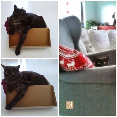 Czarny kot w pudełku i n aszarym fotelu z Ikea