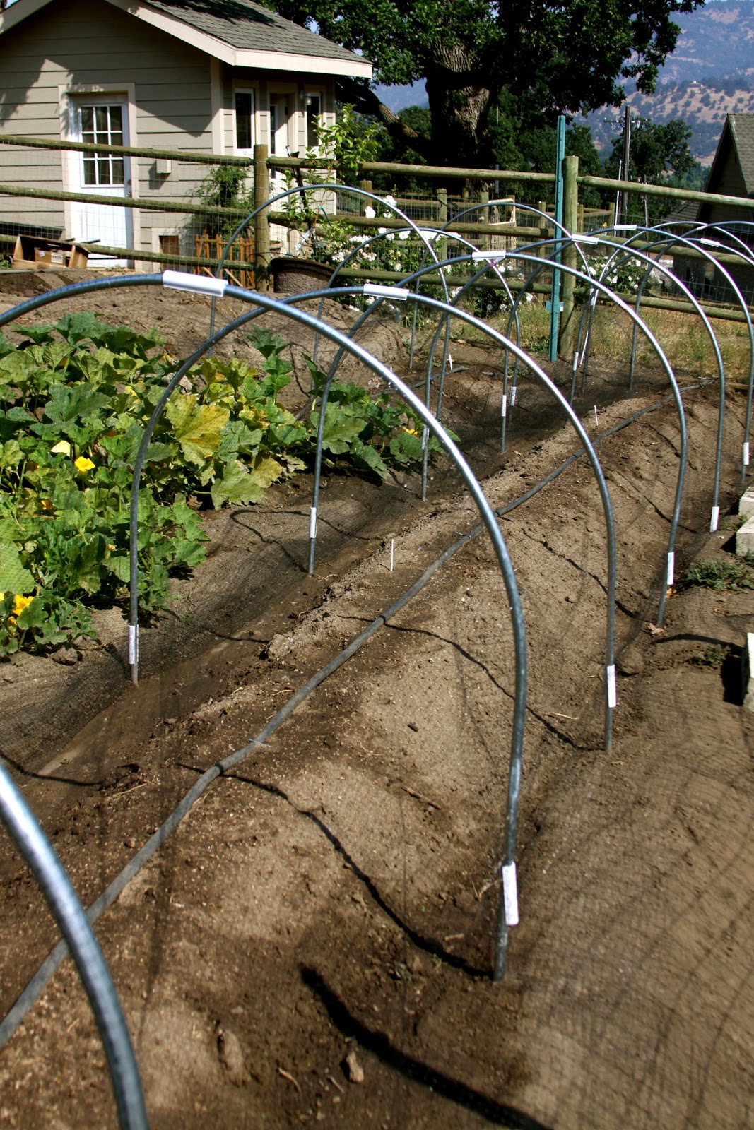 Homestead Revival: Low Tunnels For Gardening Success