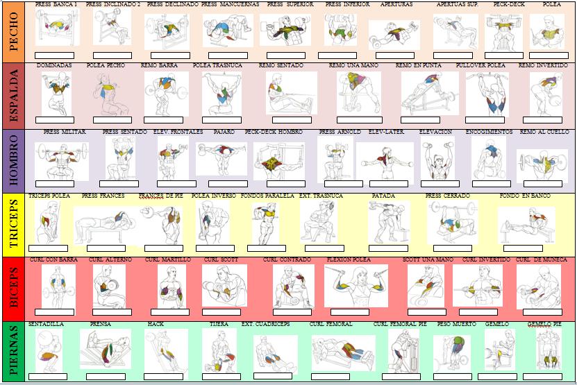 Sheet bodybuilding training routine table of strength for Gimnasio las tablas