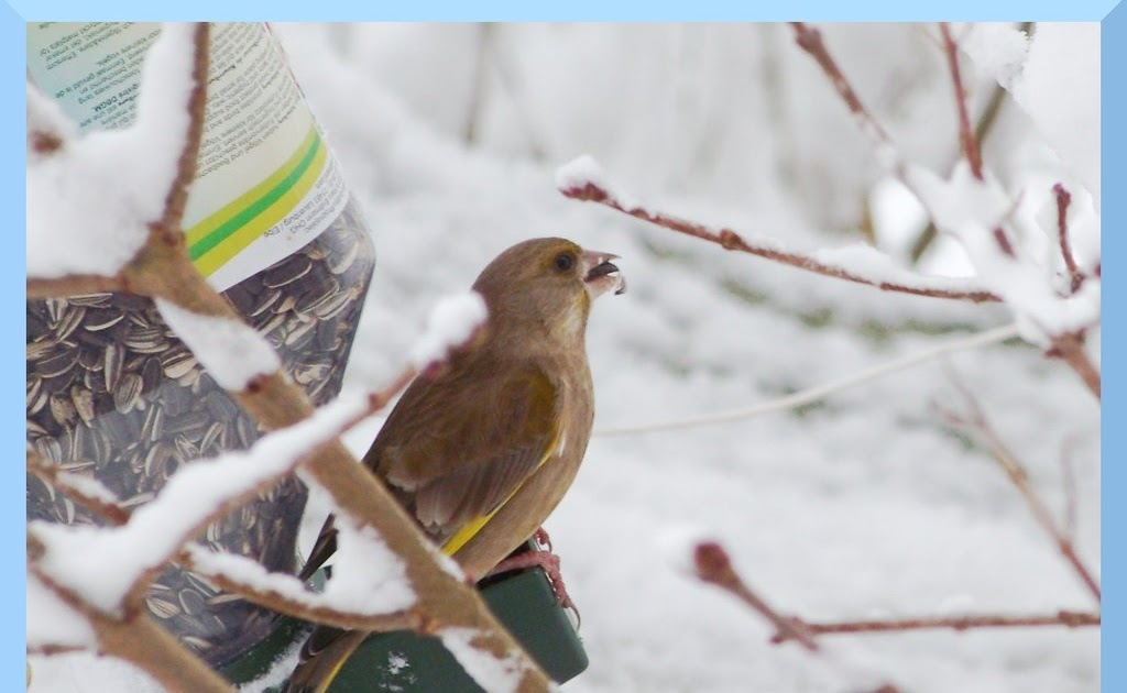 beautiful bird winter ndash - photo #40
