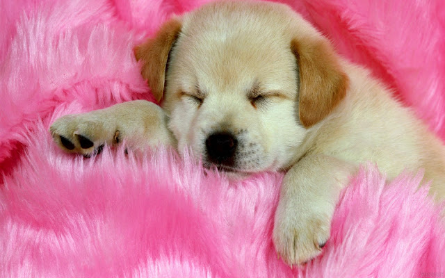 Cute Dog Desktop Wallpaper