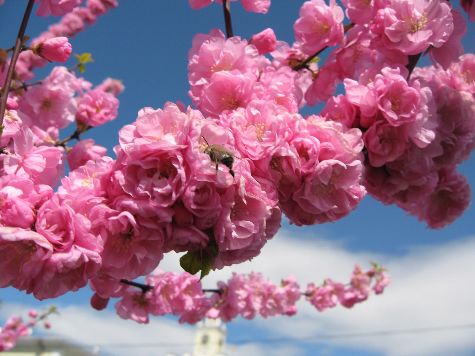 ... сакуры ;-) Приятного просмотра: isawthebeauty.blogspot.com/2011/02/blog-post_22.html