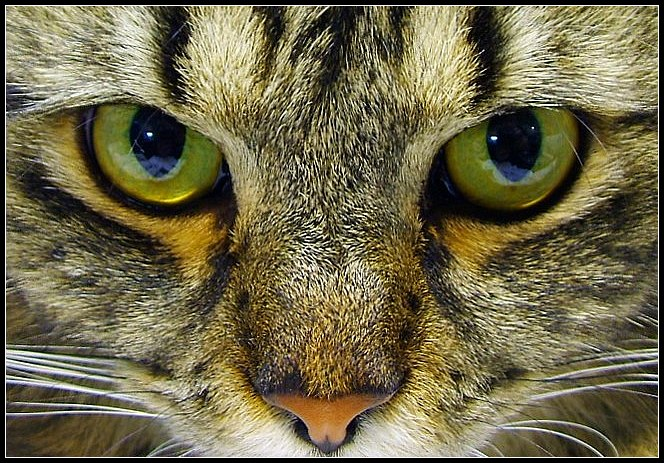 Eye of Cat