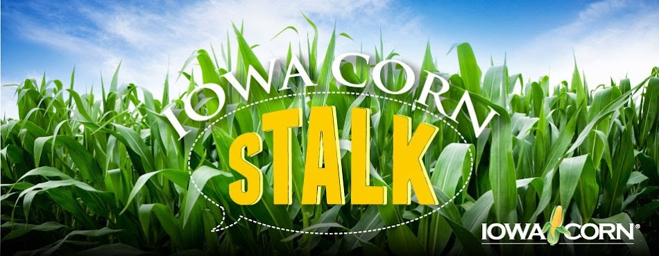 Iowa Corn sTalk