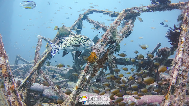 A swarm of different and colorful fishes fighting the current in a shipwreck