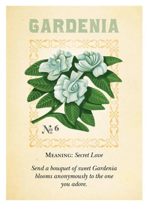 gardenia flower meaning  klejonka, Natural flower
