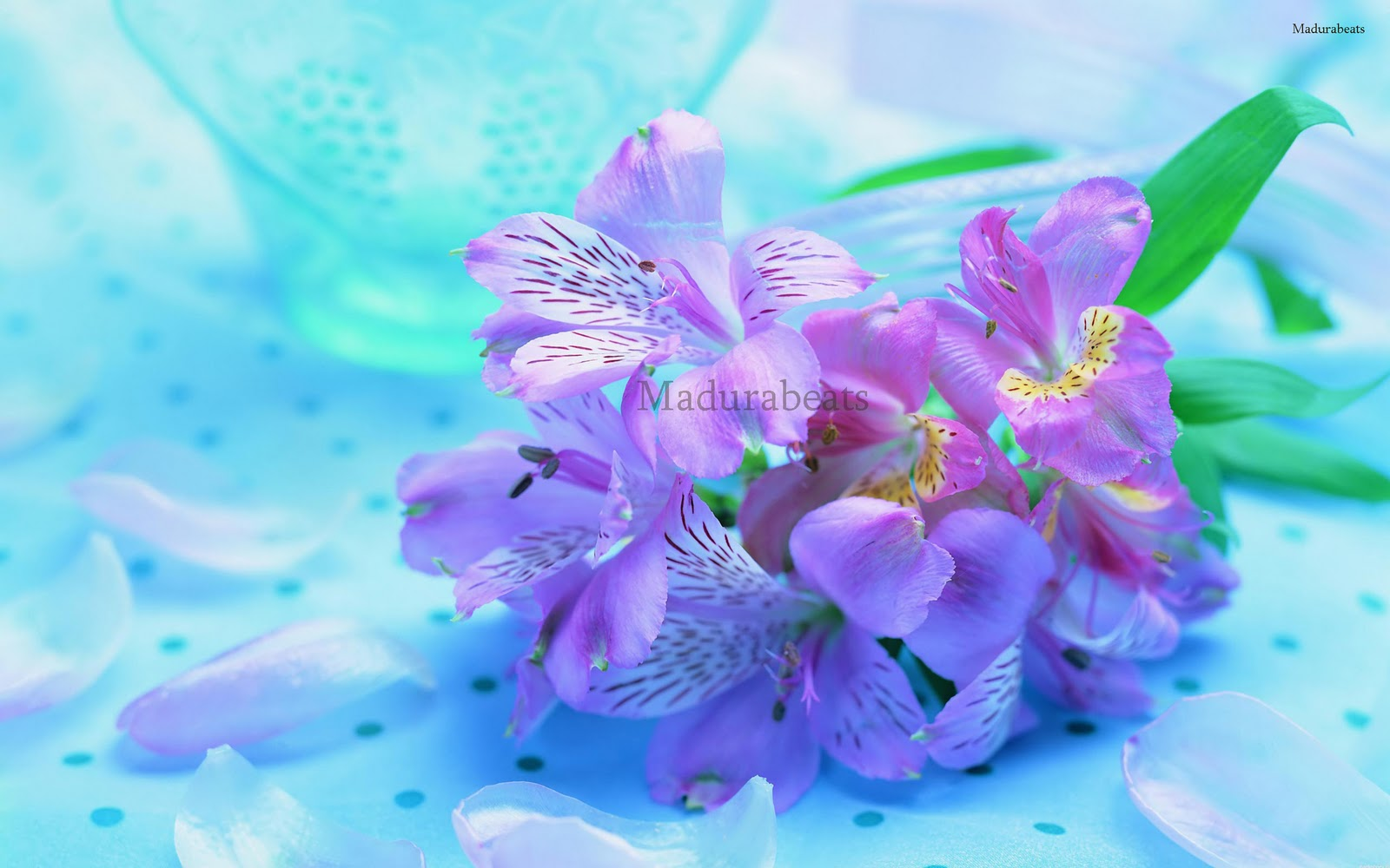 Flower images, Wide screen wallpapers,fresh flowers,Beautiful flowers,Beautiful Fresh Purple Flowers Blue background