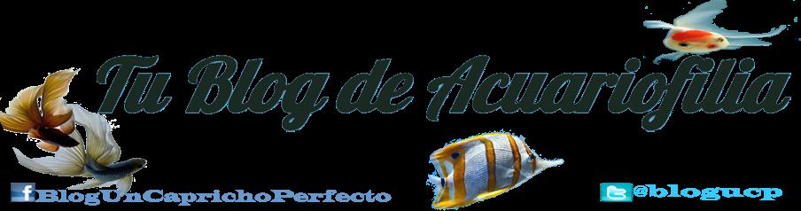Tu Blog de Acuariofilia