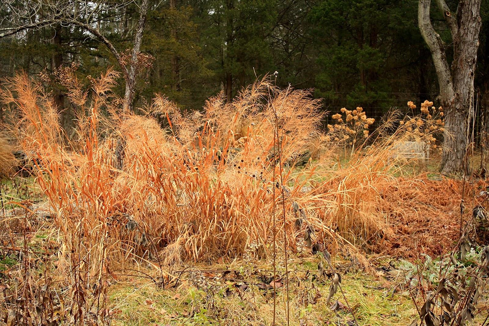Unique Avant Gardener Chords Mold - Brown Nature Garden ...