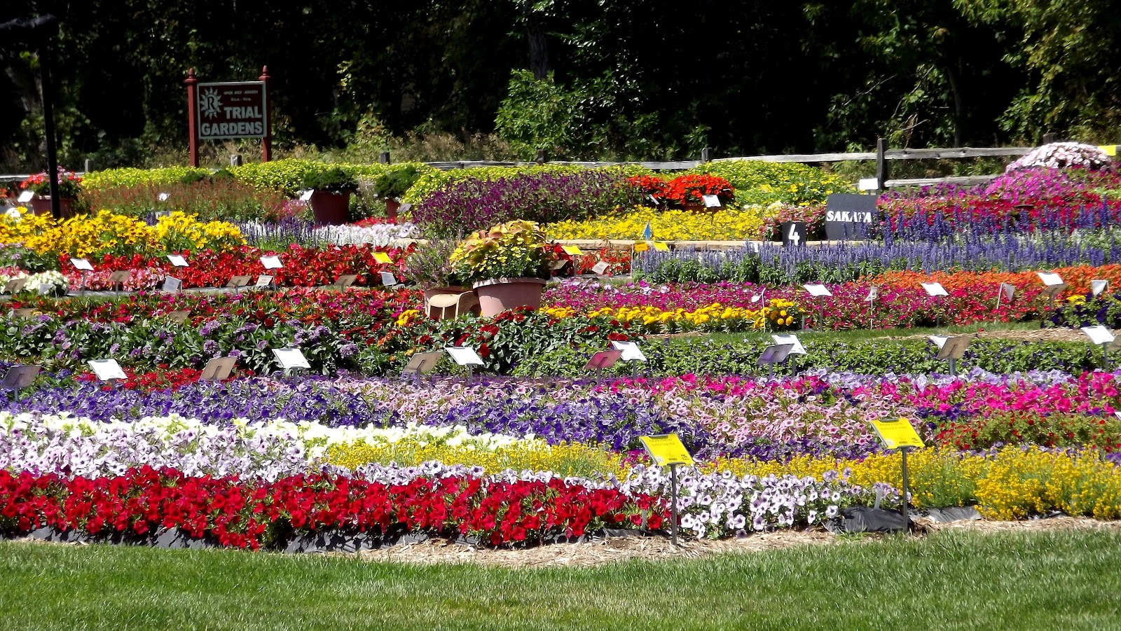 Rakers Trial Gardens Flowers In Michigan