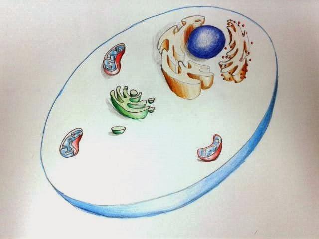 bienvenido al fascinante mundo de las ciencias dibujo clula para