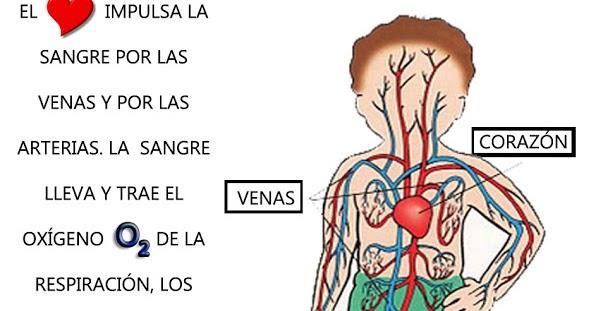Maestro San Blas: Aparato Circulatorio