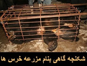 بیست و سه دلیل برای دوستداران حیوانات که چین را تحریم کنند.
