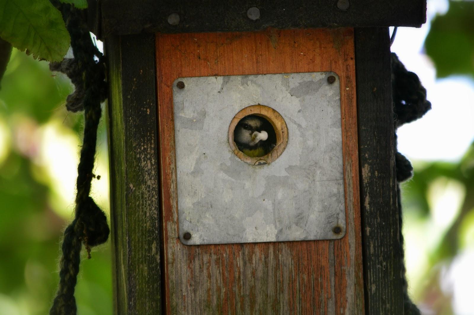 Olann: Federn, fu00e4rben und fotografieren im verregneten Garten
