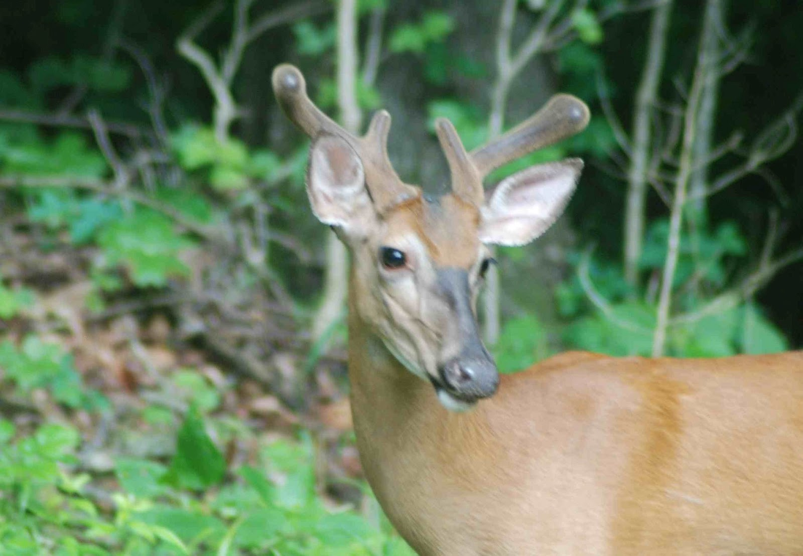 Deer Racks Photos | New Calendar Template Site