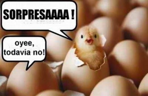 CHISTES DE ANIMALES - CHISTES DE POLLITOS vía http://fraseschistosos.blogspot.com/