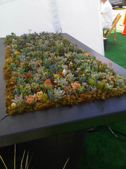 succulent plant garden