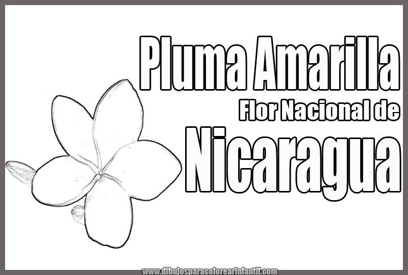 Flor Nacional De Nicaragua Para Colorear