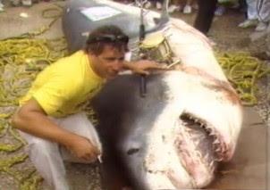 Mondo pesca news video il pi grosso squalo mai catturato for Grosso pesce di lago