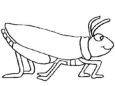 O mundo colorido algumas imagens de insetos para imprimir - Sauterelle dessin ...