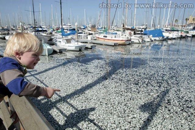 http://2.bp.blogspot.com/-F01LNxE7aLs/TXirNxjI1iI/AAAAAAAAQug/IR64DHuFLRY/s1600/dead_anchovies_640_01.jpg