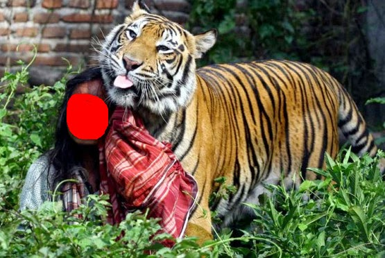 Cerita Legenda Manusia Harimau Minang Kabau Sumatera Barat