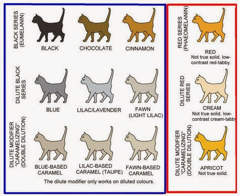 The Presurfer Domestic Cats Colour And Pattern Charts