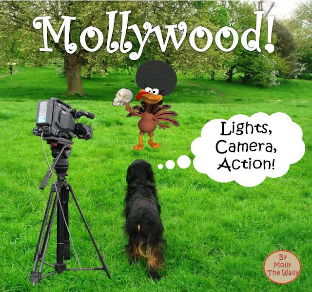 Molly The Wally Does Mollywood!