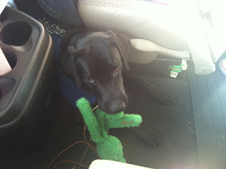 Here's a photo of Coach with his green wubba.  It's a fuzzy kong with legs hanging down.  It does not squeak.