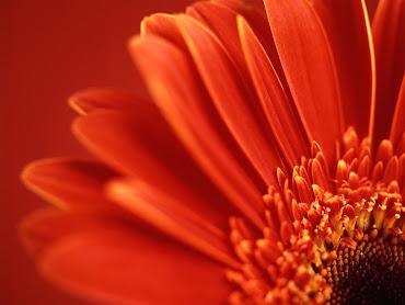 #4 Flowers Wallpaper