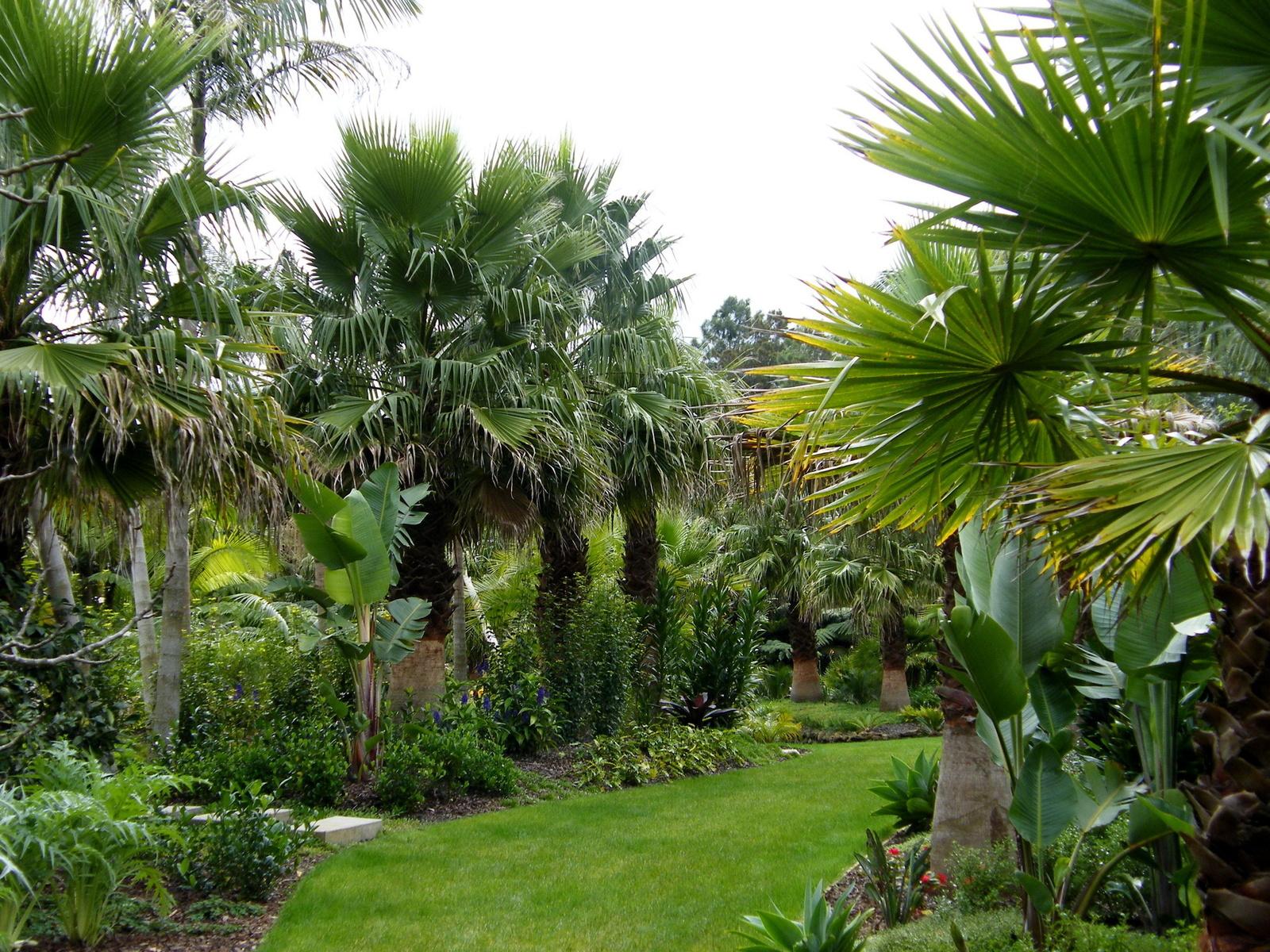Paisajes lindos con jardines imagui for Jardines con palmeras