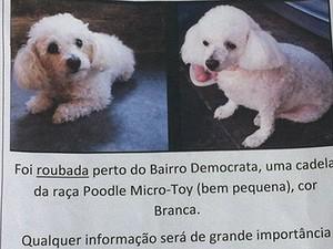 Dona da cadela ofereceu recompensa a quem achasse e devolvesse Sophia (Foto: Marina Proton/G1)