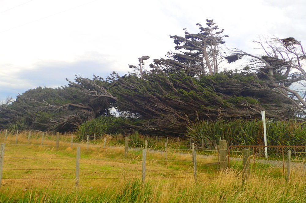 Hurricane strength winds batter South Island New Zealand!