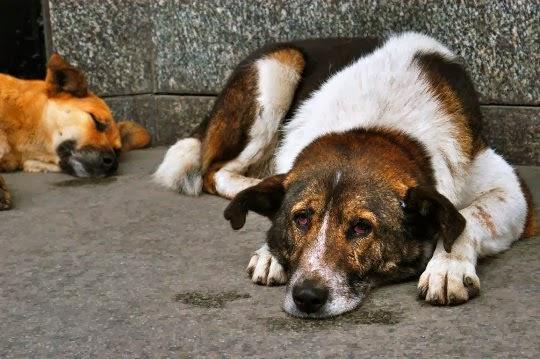 Бездомные животные/собаки