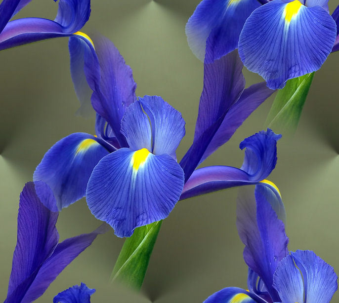 Iris Flowers Flowers World