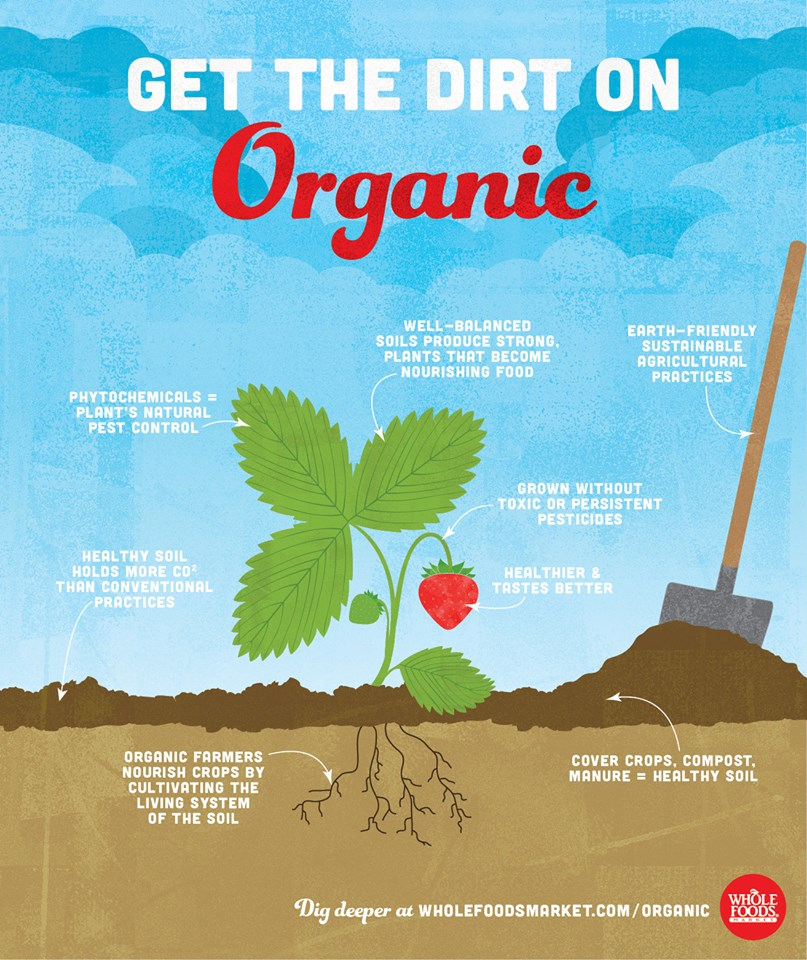 get more with organic food essay
