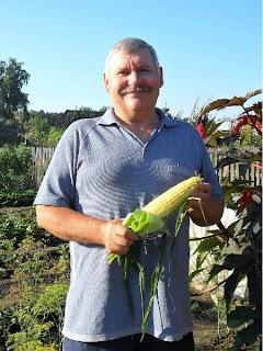 7 августа, спелый початок кукурузы