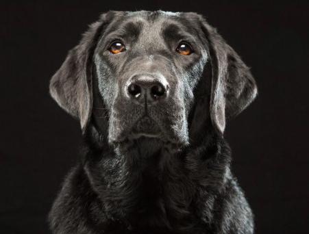 La razón por la que no puedes resistirte a mirar los ojos de un perrito Captura%2Bde%2Bpantalla%2B2015-03-18%2Ba%2Blas%2B22.25.35