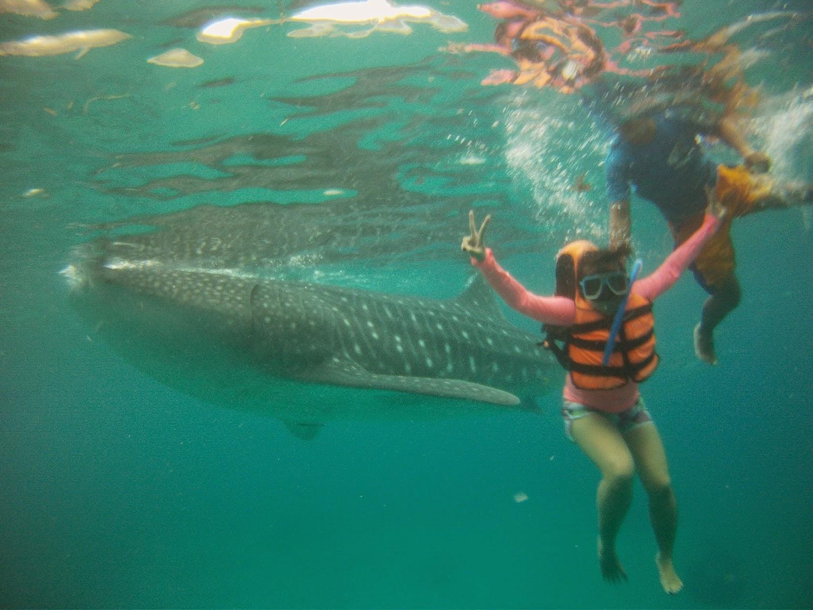oslob swimming with whaleshark selfie
