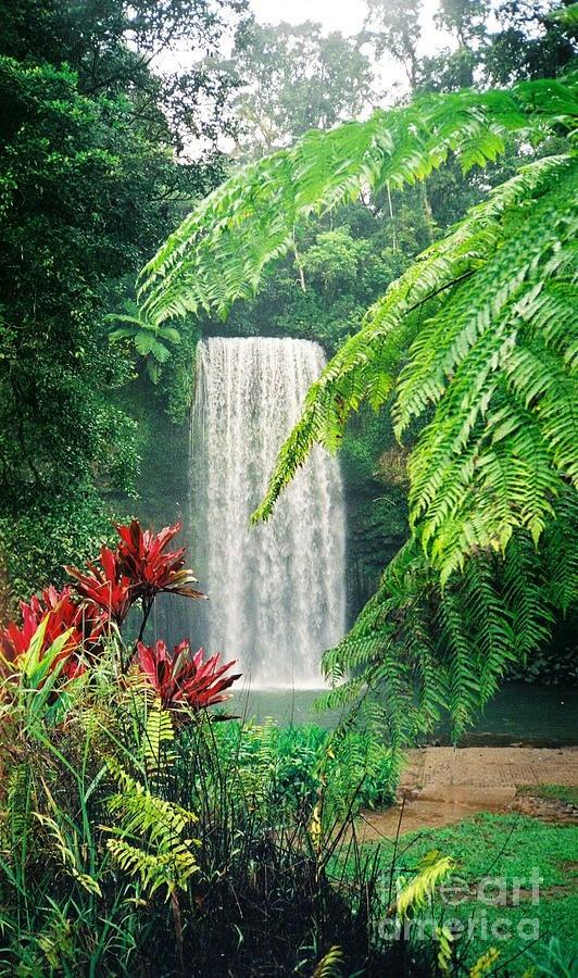 Milaa Milaa Falls,Australia