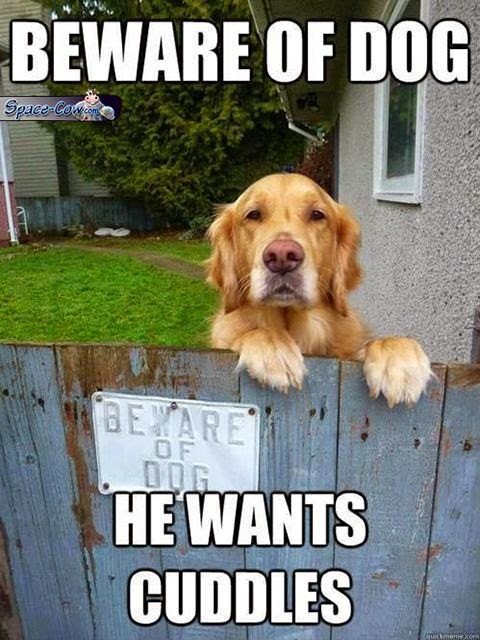 funny animals dog picture