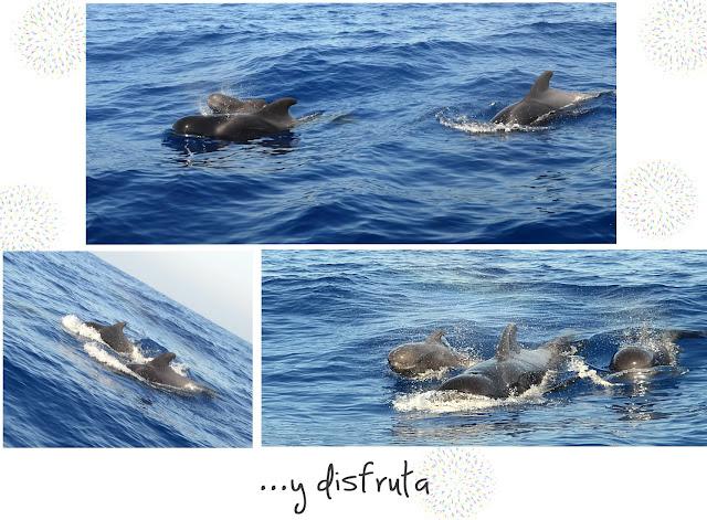 Costurilla, ballenas