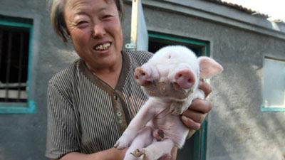 foto babi aneh