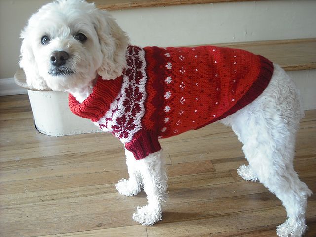Knitting Pattern Small Dog Jumper : Miss Julias Patterns: Free Patterns - Everything for Dogs - Coats & ...
