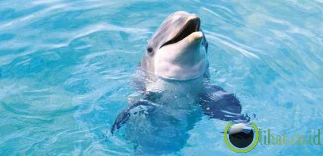 Lumba-lumba teman laut ramah Anda