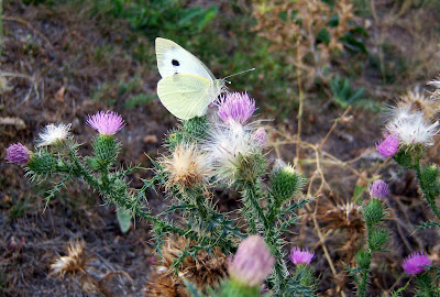 Mariposa tomando la miel de las flores