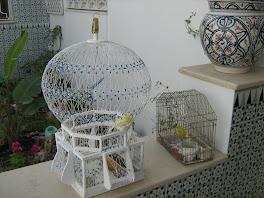 cage de sidi bou said