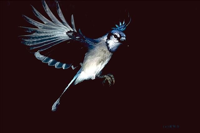 நான் பார்த்து ரசித்த புகைப்படங்கள் சில.... - Page 2 Flying+Birds+%252810%2529