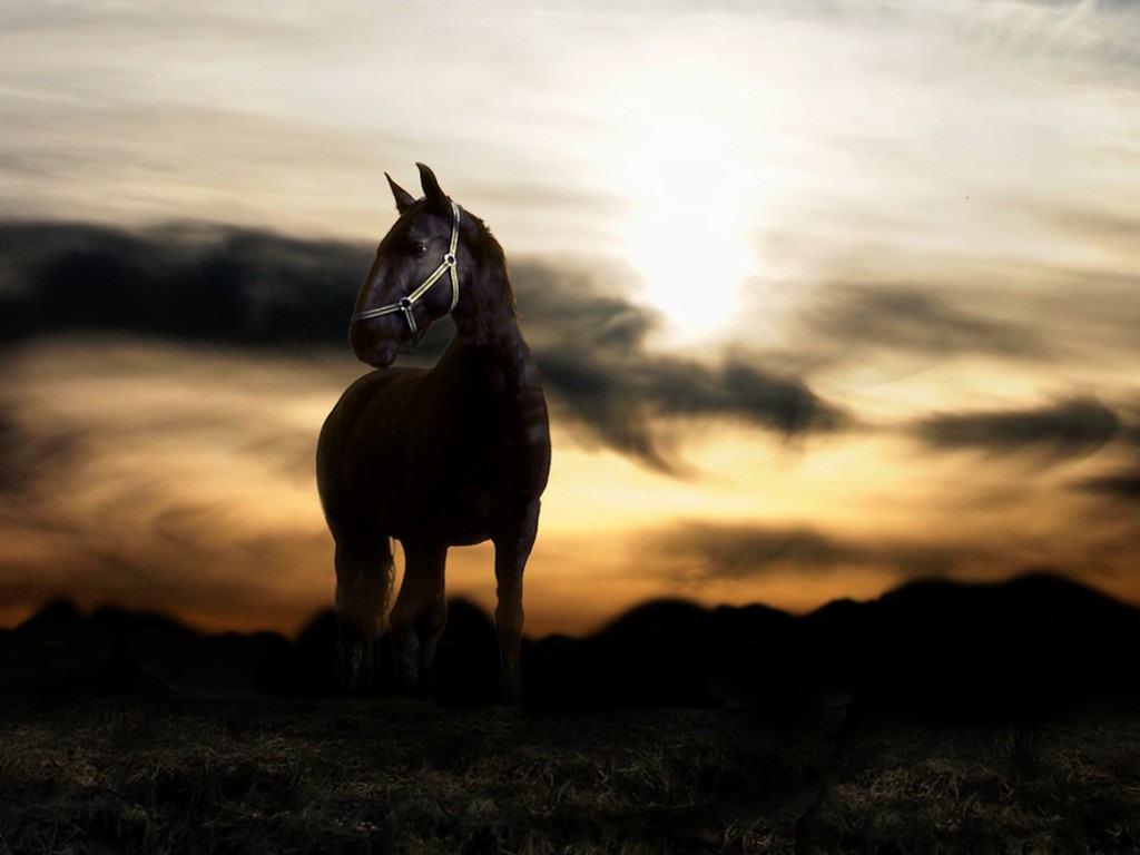 http://2.bp.blogspot.com/-F4uT3Vs0Jhs/TwHQGZAtdII/AAAAAAAAUNo/J1EHTHuO0k8/s1600/Sunset_and_black_horse_Wallpaper.jpg