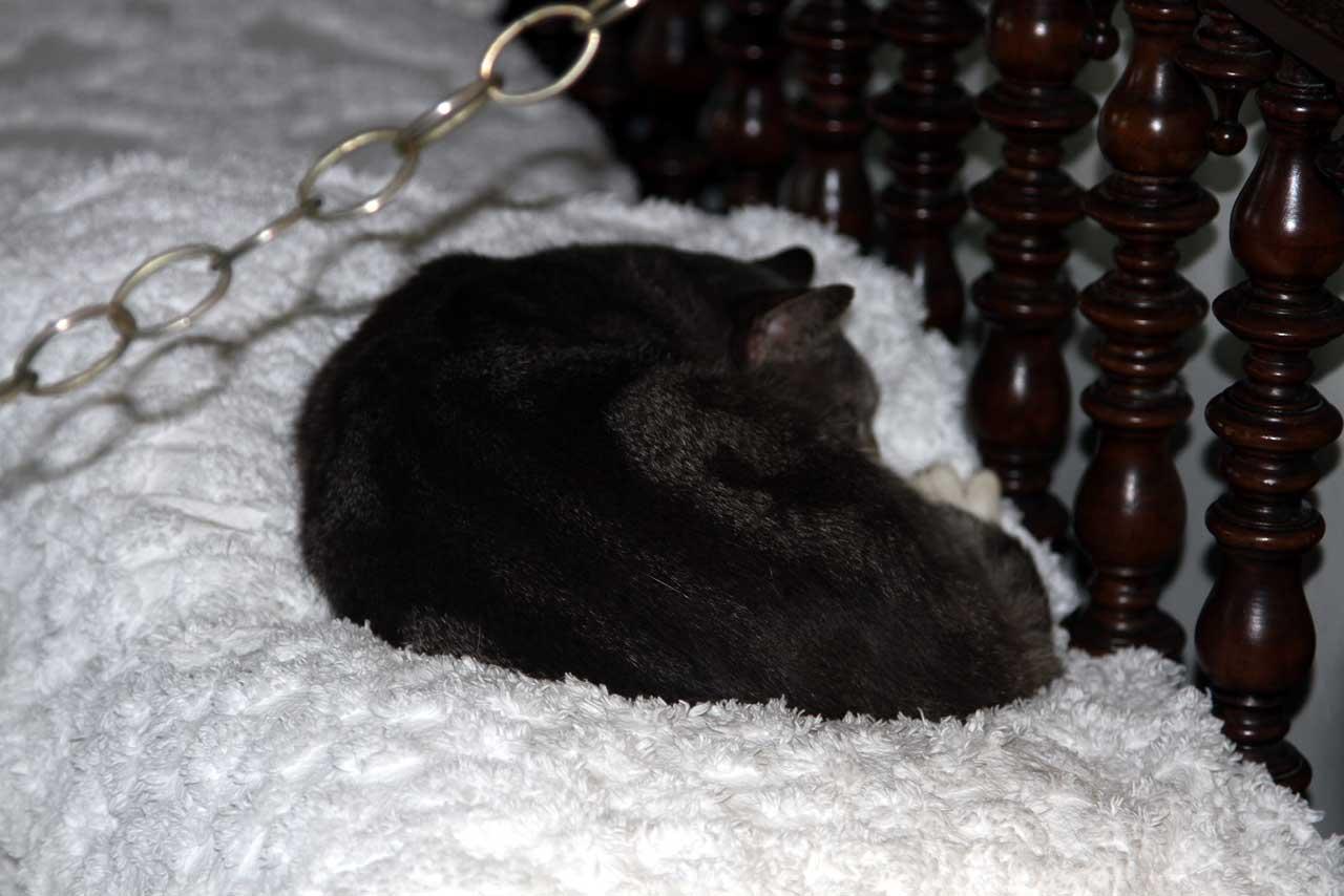 Nepeta cataria - Gedanken aus dem Katzengarten: Februar 2013